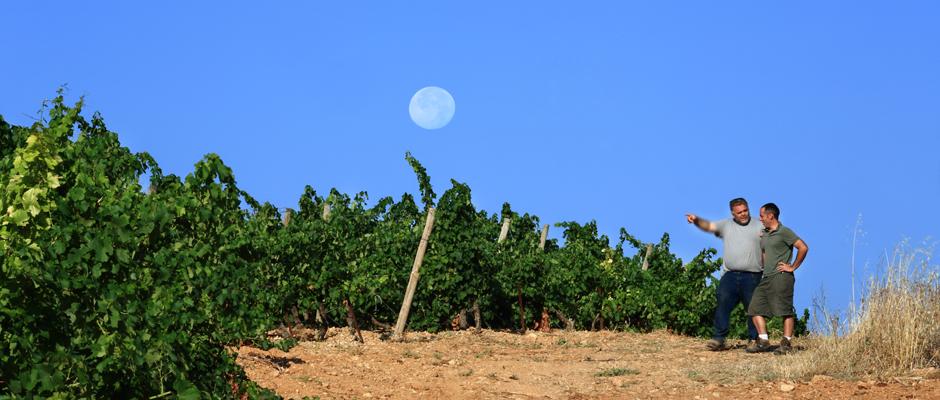 Photo reportage domaine de Castelnau