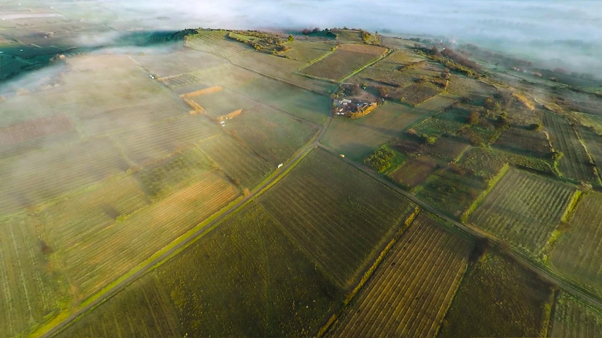 Photo & Vidéo vignoble drone