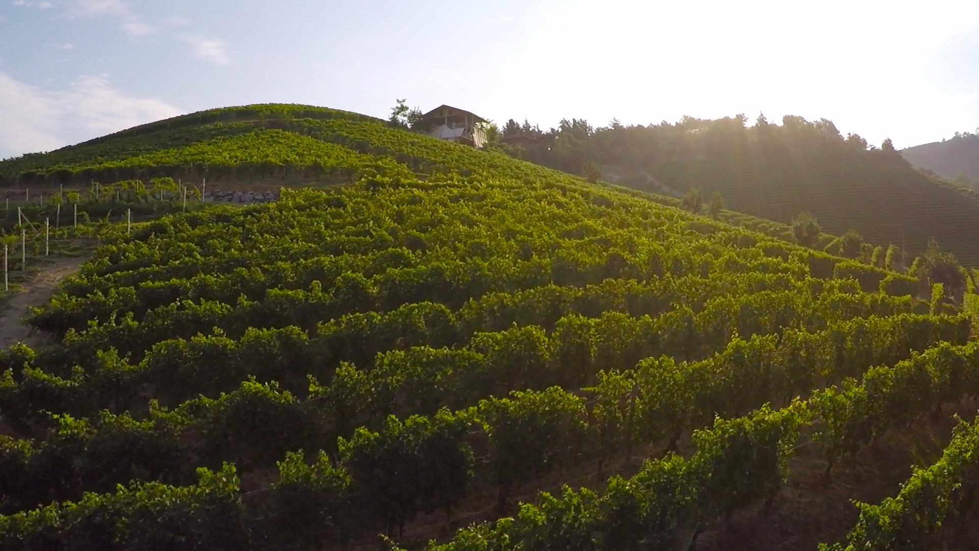 Images drone vignoble Italien