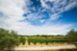 Vignoble du Minervois au domaine Parazols