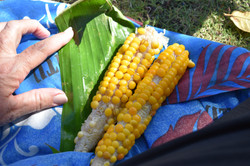 most of the corn grows like this