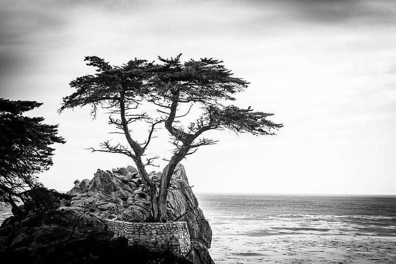 lone-cypress-ocean-BW-highres.jpg