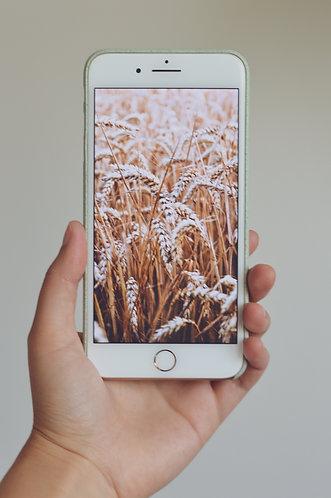 Bærekraftige iPhone deksler fra UnioCases