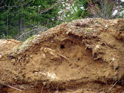 dirt.pit