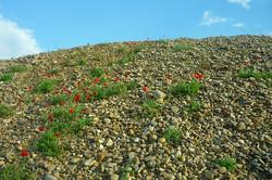 gravel-pit-