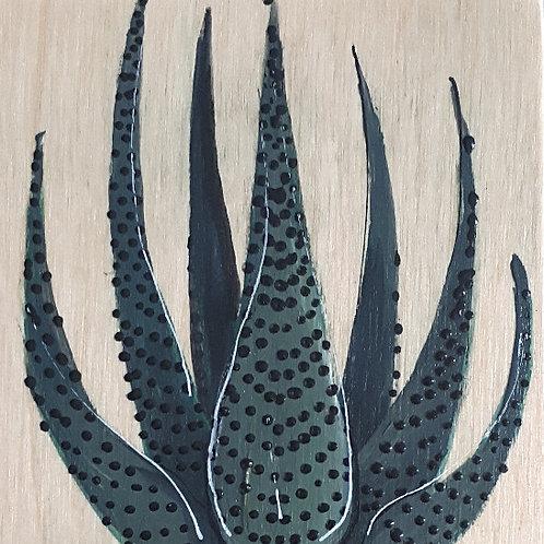 plante 141