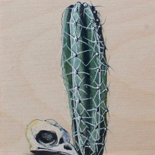 cactus #52