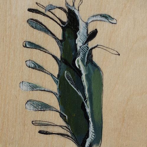 plante #3