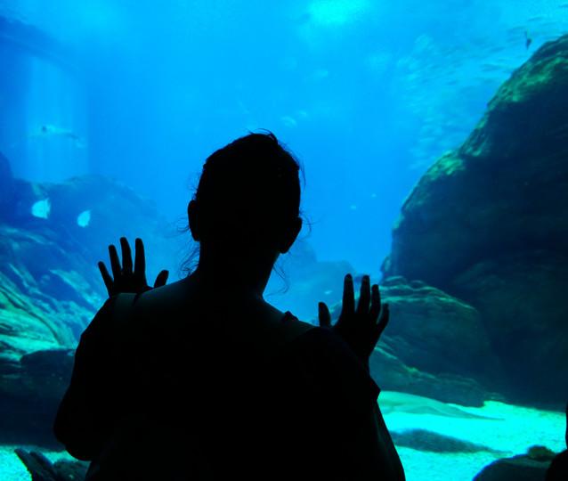 Silhuetas no Oceanário