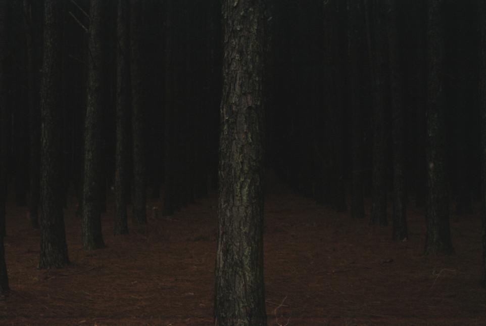 Composição para a solidão