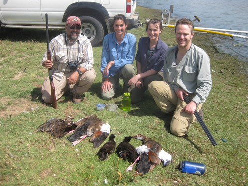Collecting ducks thanks to the MSB Bird Division