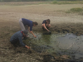 Collecting snails in New Mexico with STEM University students