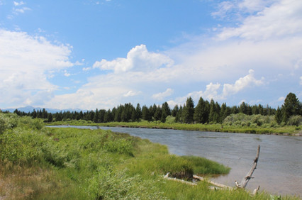 Collecting snails from Madison River, Wyoming