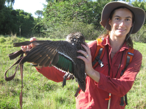 Dr. Sara Brant and yellow billed duck South Africa - infected with a new species of Trichobilhariza!