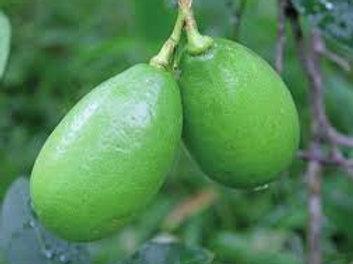 Kaji Lemon