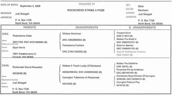 Rockcreek Strike a Pose Pedigree