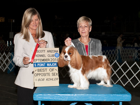 Florrie-BOS and new Grand Champion