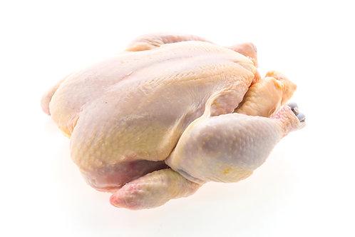 Ayam TG 1 ekor BDG