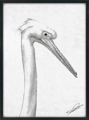 Pelican the Halftone