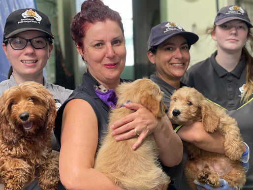 """Why Puppies Downunder are """"True'' Ethical Breeders"""