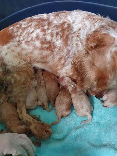 Jan and her puppies.jpeg