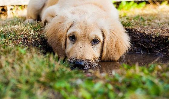 puppy-5413166_1280-3cj5cpp44ewpt0iimvkxz