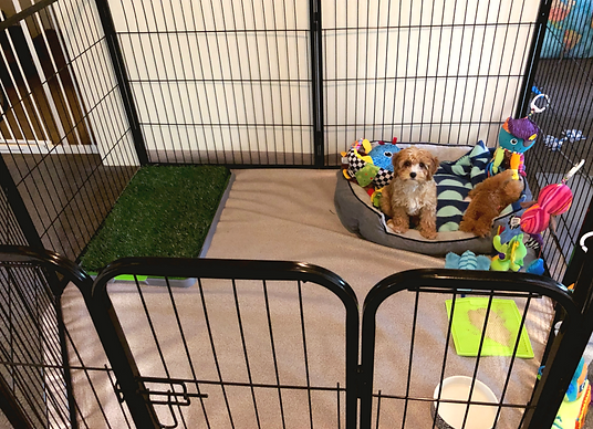 Puppy in her Play Pen.png
