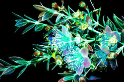 Iridescent Lycophyte