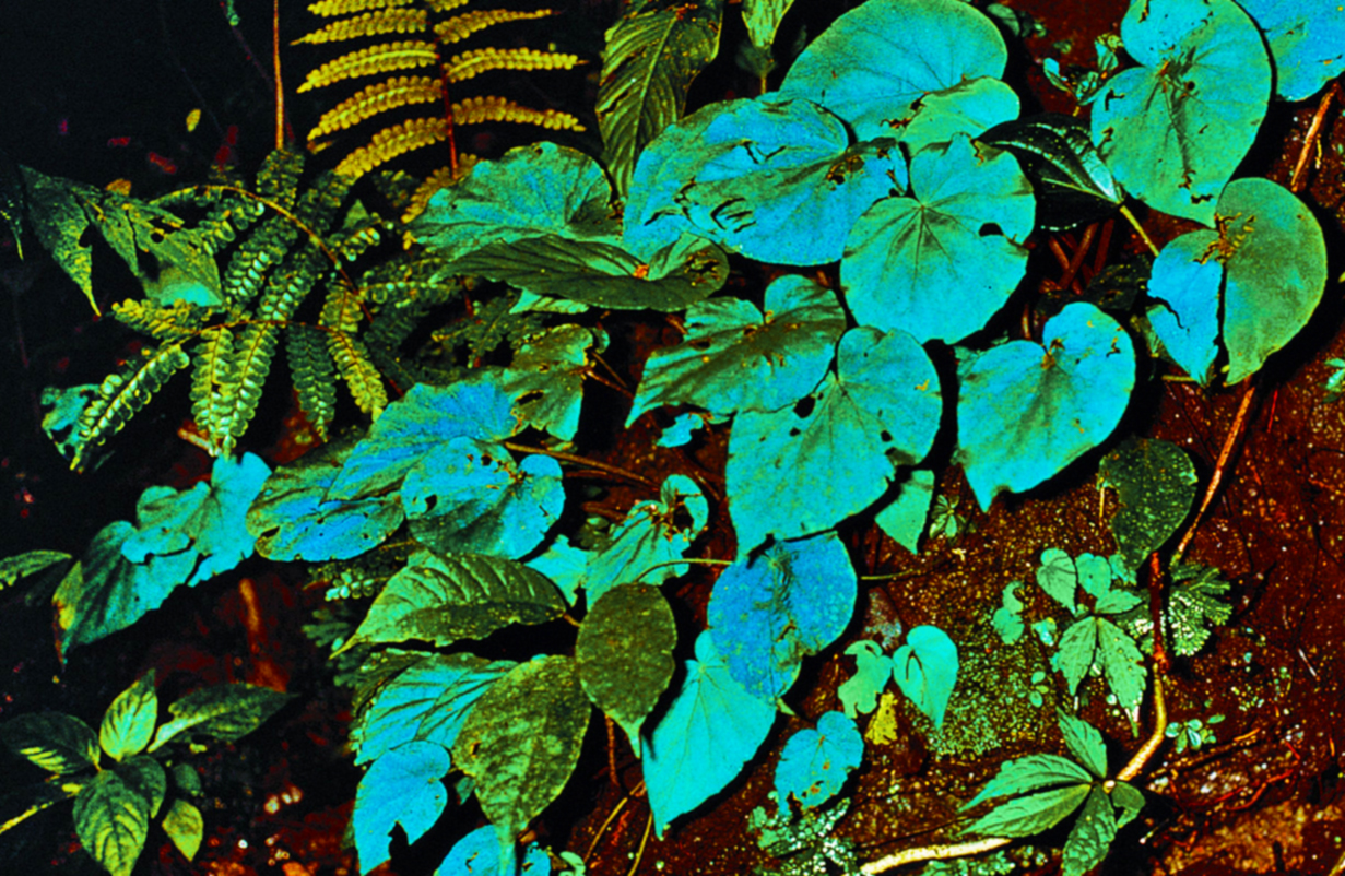 Iridescent Foliage