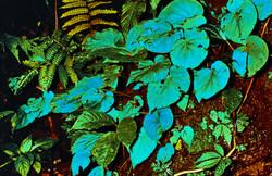 Iridescent Foliage