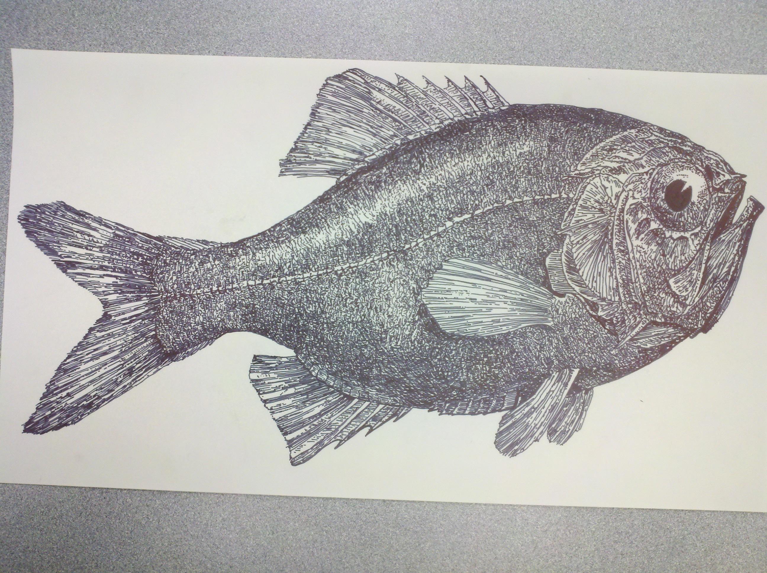 Melt Fish