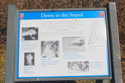 """""""Down to the Sound"""""""
