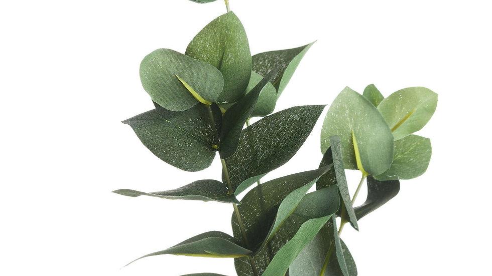 Eucalyptus Filler