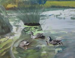 Edward Johanson-Ey Ducks I saw a fish
