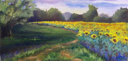 Barbara Mandel - Sunflowers