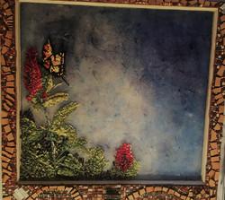 Anastasia Walsh - Papilio