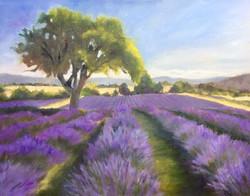 Barbara Mandel - Lavender