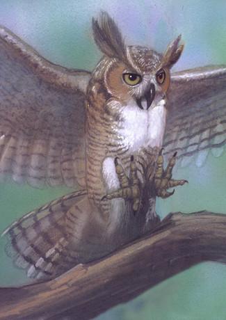 Horned Owl.jpg