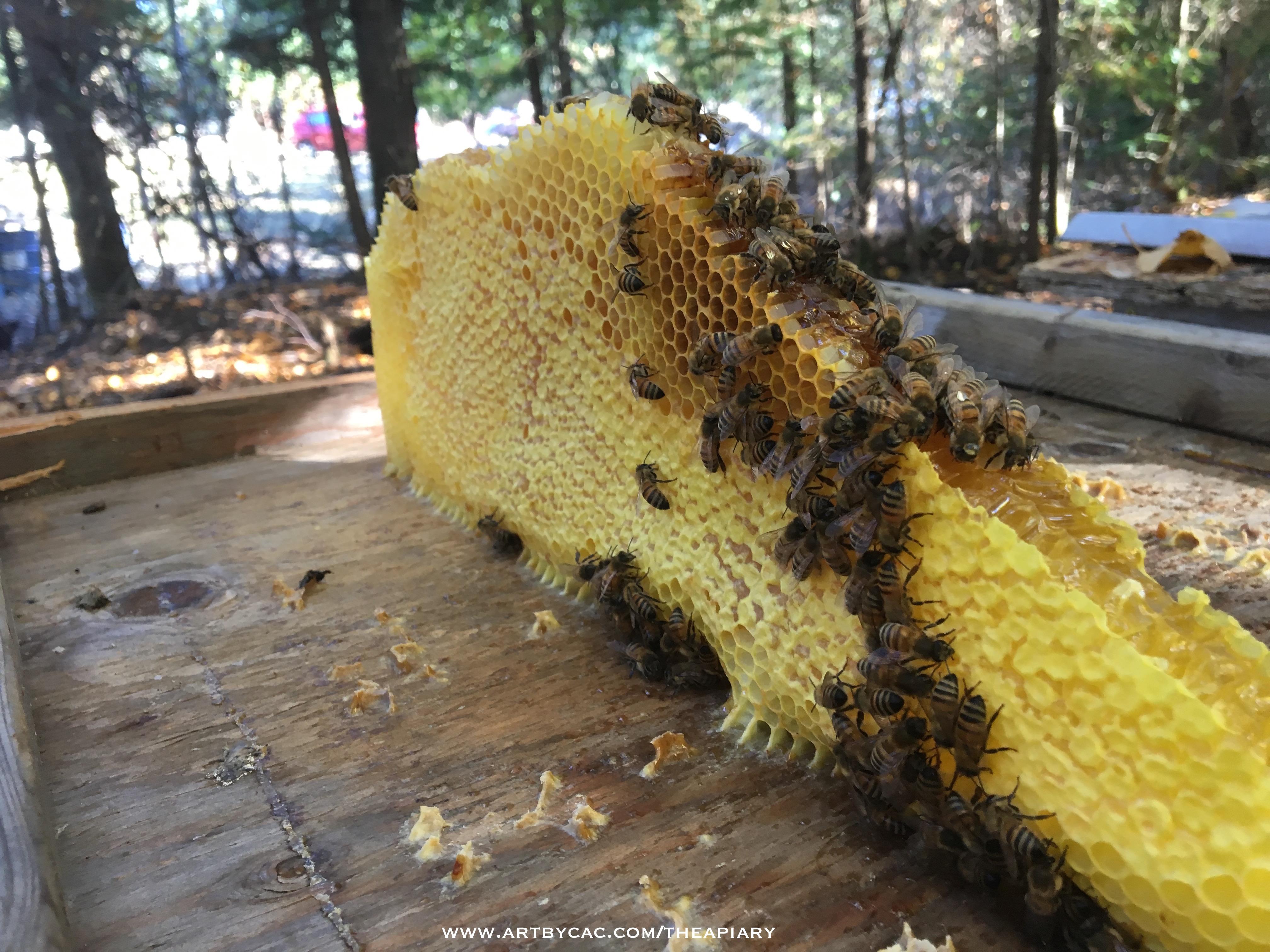 honeycomb3.jpg
