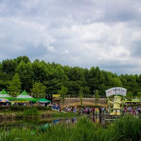 เทศกาลป่าไผ่ ทัมยาง