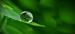 Les plantes, leurs vertus, leurs propriétés, les avons sur place ou les cultivons, les transformons nous-mêmes.