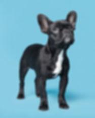 Dog on Blue