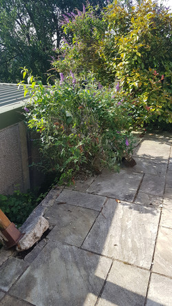 damaged area to replace fence in.jpg