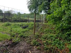 70m deer fencing - dore.jpg
