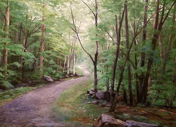 Woodland Dawn