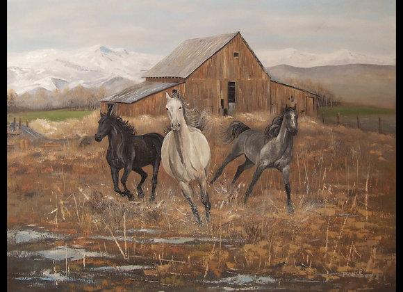 Horse Play - Print
