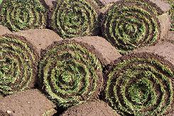 Close up of turf rolls.jpg