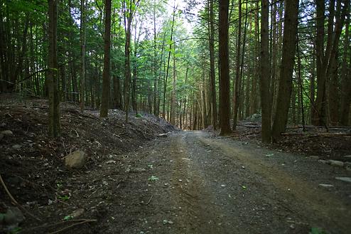 Sentier aménagé érablière