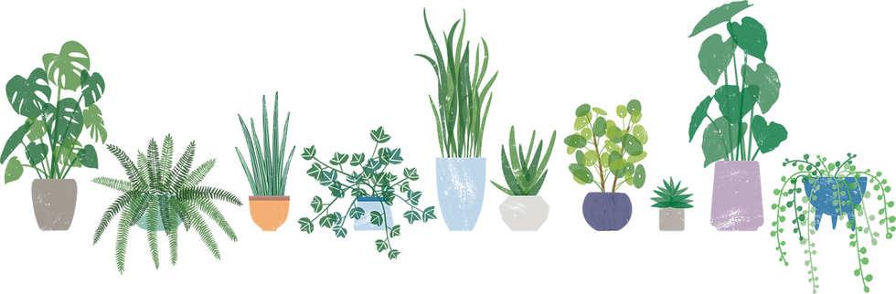 plants in a line.png