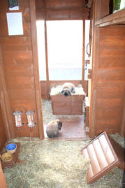 Inside our rabbit chalets